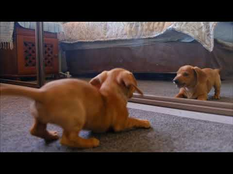 Sweet Dogs - Cute and Funny Dog Video Compilation #1 | Aww Animals