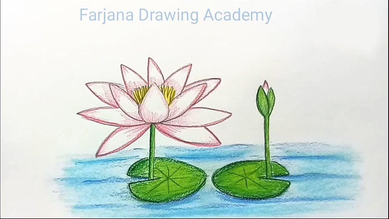 How to draw water lily step by step youtube how to draw water lily step by step izmirmasajfo