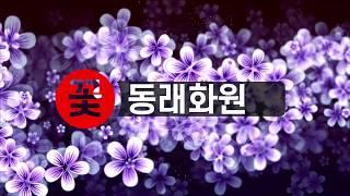 부산 동래구 꽃배달 꽃…