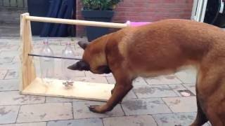 How To Keep Your Dog Busy All Day (dog training)