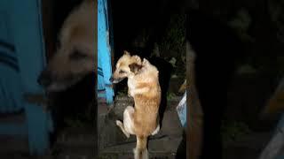 Собака напугалась салюта Приколы с животными Смешное видео про собак