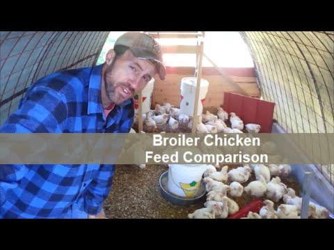 Broiler Chicken Feed Comparison