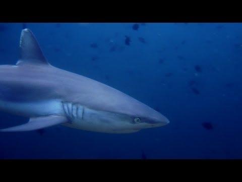 Diving Ari Atoll Maldives