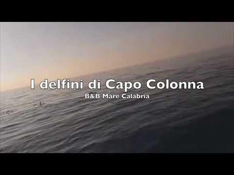 I delfini di Capo Colonna