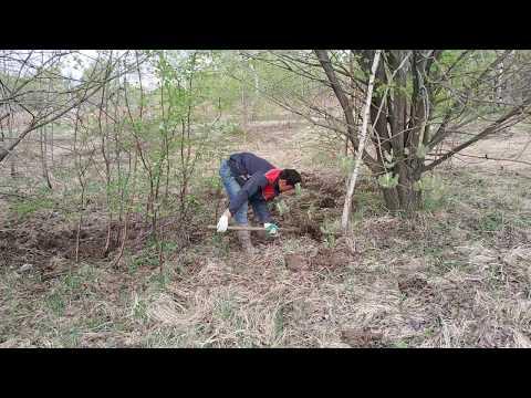 Строительство дома на болоте (болотистом участке)