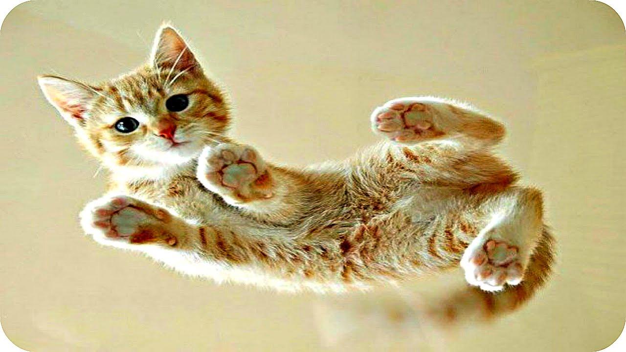 Смешные Кошки 2016! (#9) Веселая Видео Подборка! Смешные Животные 2016/