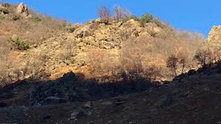 Tunceli Elazığ sınırı Peri Suyu yanı BAĞIN KAPLICASI DAĞ KEÇİLERİ