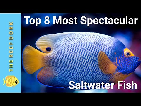 Top 8 Most Spectacular Marine Fish