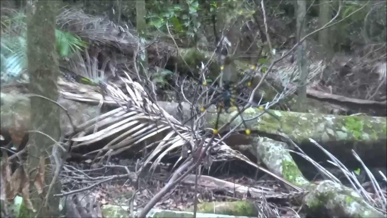 Jungle Giant Veikkaus