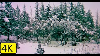 Winter Snow With Beautiful Christmas Music Background Relaxing Christmas New year 2020