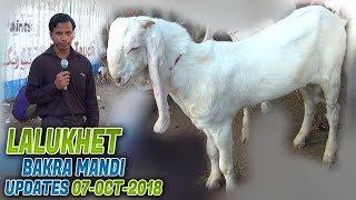 Lalukhet Bakra Mandi 7-10-2018 Latest Updates (Jamshed Asmi Informative Channel) In Urdu/Hindi