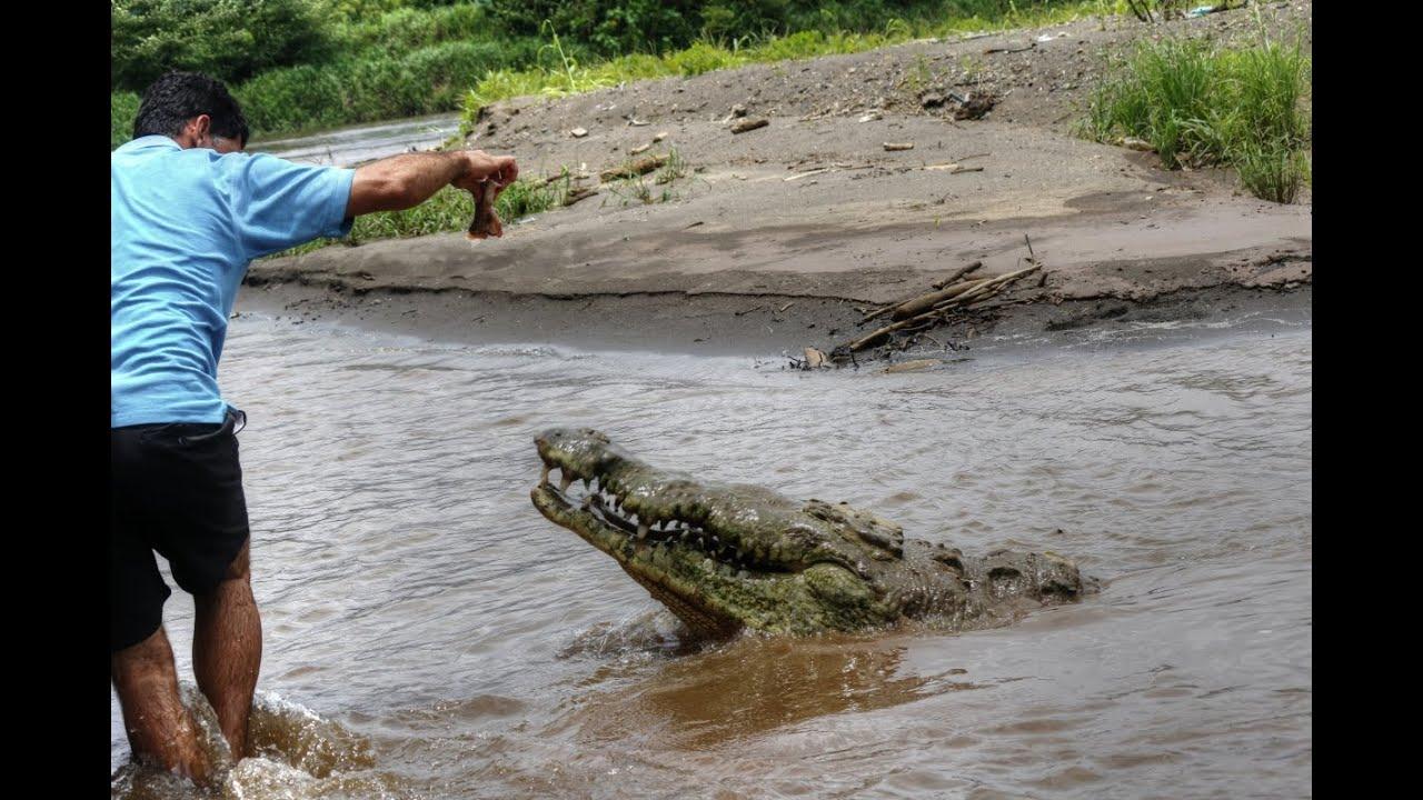 Crocodile Boat Tour Costa Rica