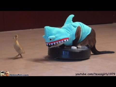 Thumbnail for Cat Video Cat In A Shark Costume Chases A Duck While Riding A Roomba