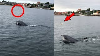 Dolphin caught juggling a Jellyfish in Denmark
