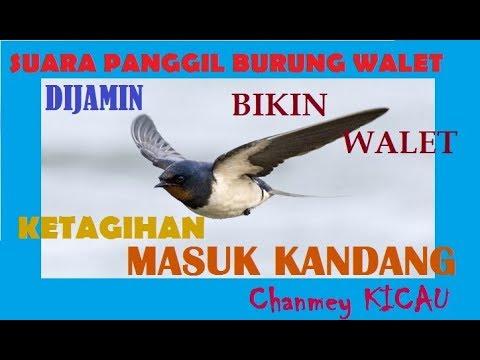 SUARA PANGGIL BURUNG WALET DI JAMIN BIKIN WALET MASUK KANDANG 2018