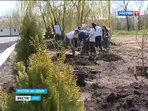 Жители Ростова смогут принять участие в разработке планов по озеленению города