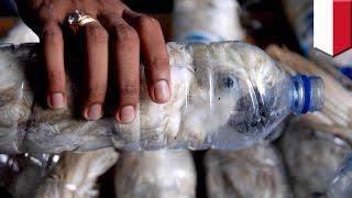Przemyt zwierząt: mężczyzna ukrywa 24 papugi w butelkach po wodzie