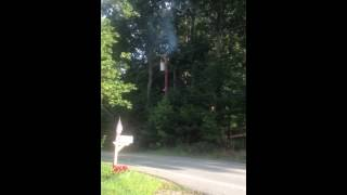Power wires burn tree