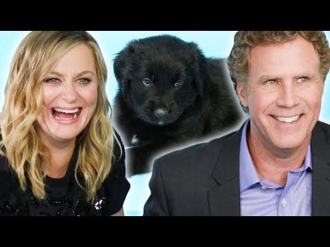 Amy Poehler & Will Ferrell Play With Puppies While Answering  Questions