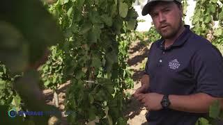 Rickety Bridge   Masterclass   Vineyard Management