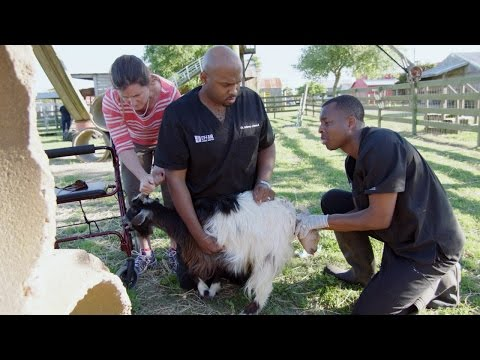 A Goat in Labor Sends Ross and Blue into Action