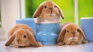Детское видео. Видео для детей. Выставка кроликов для детей. Красивые кролики. пушистики.