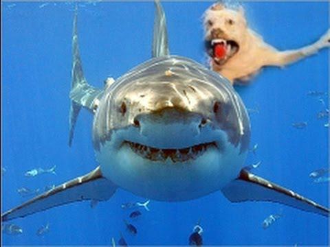 CNN: Dogs attack shark - YouTube