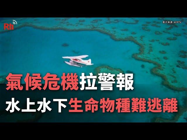 氣候危機拉警報 水上水下生命物種難逃離【央廣國際新聞】