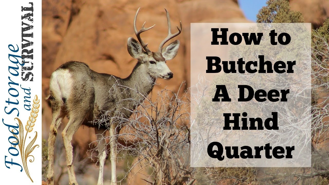 Deer Hind Quarter Diagram Wiring Diagrams Butchering How To Butcher A Youtube Meat Cuts