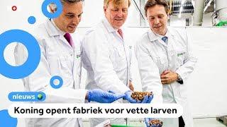 Grote insectenfabriek geopend om varkens te voeren