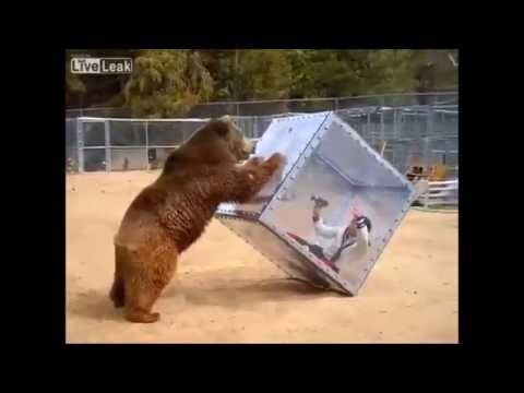 Bbc Funny Dog And Cat Video When Owners Away