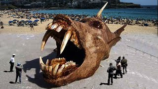 Weirdest Things Washed Up on The Beach