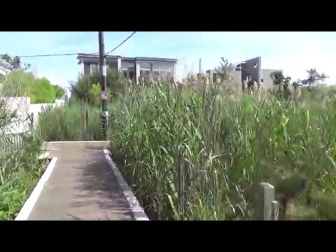 Fire Island Pines & Cherry Grove Boardwalks