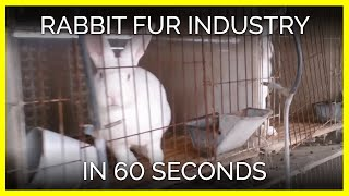 Rabbits Skinned Alive in the Chinese Fur Trade