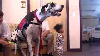 Bentley Visits the Hospital - Boys Town National Research Hospital