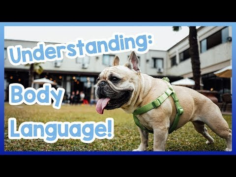 What Your Dogs Body Language Means! How to Understand What Your Dogs Language and Behaviour Means!