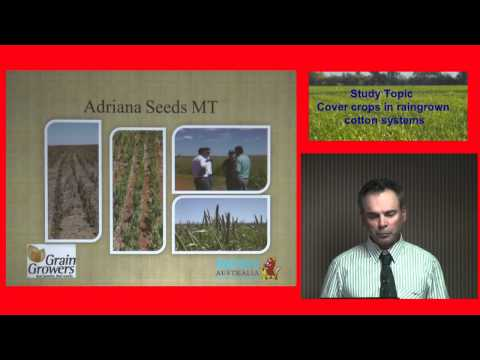 Cover Crops In Rain Grown Cotton Systems- Robert Blatchford.mpg