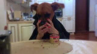 Конец диете! Собака ест руками.