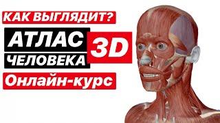 Скачать Анатомическии онлаи н атлас человека в 3D