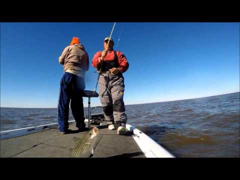 Cold and Windy Striper Fishing