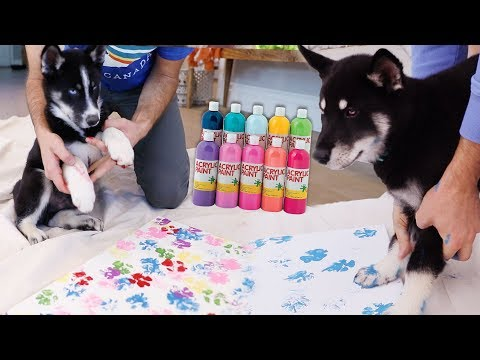 Husky Puppies Make Arts & Crafts