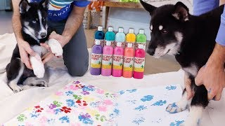 Download Husky Puppies Make Arts & Crafts Mp3 and Videos