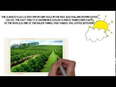 Australian Grown Organic Coffee | Byron Beans