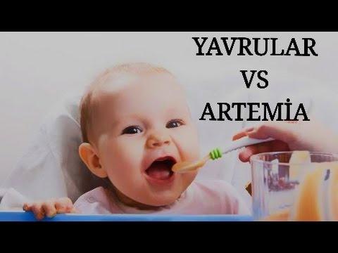 Artemia Vs Sajica