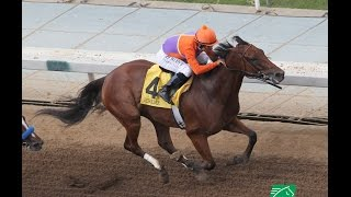 RACE REPLAY/ANALYSIS: 2015 Zenyatta Stakes Featuring Beholder
