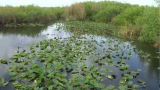 Florida National Everglades Park Documentary