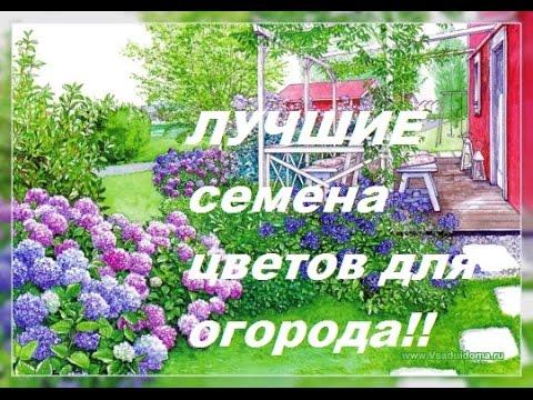 Цветы однолетки для огорода! Подборка лучших сортов для Сибири
