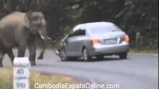 Atak słonia na samochód! niebezpieczne zwierzęta Świat Najbardziej Kompilacja 2014