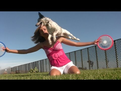 These Dogs Do Stunts, Not Tricks