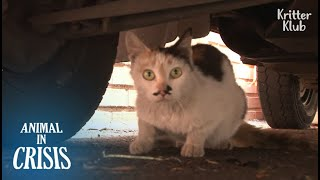 Cat Who Once Lost Kitten Makes A Sad Decision To Protect Her Only Child | Animal in Crisis EP201